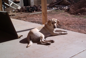 sunbathing3